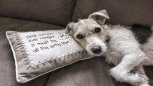 Necesitas limpiar el sofá mira estos consejos1.1920