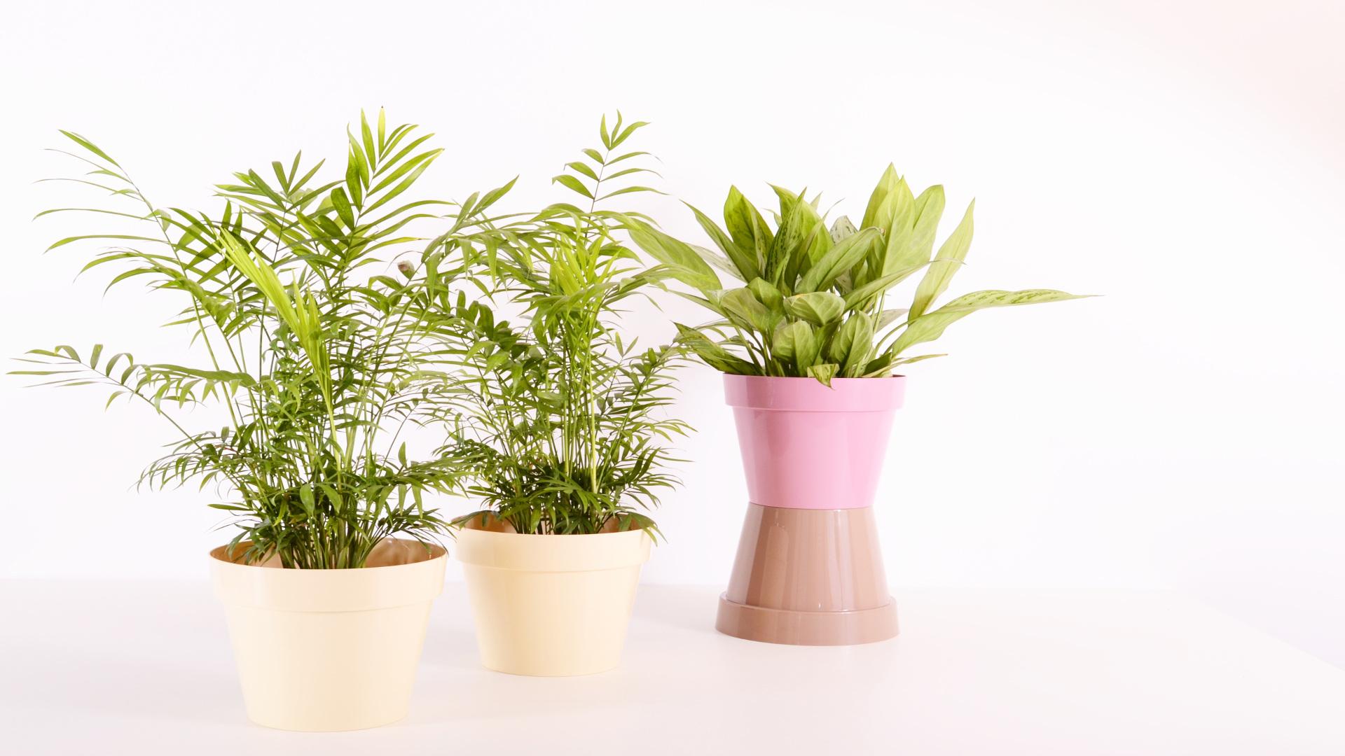 Plantas que purifican el aire de nuestra casa.1920